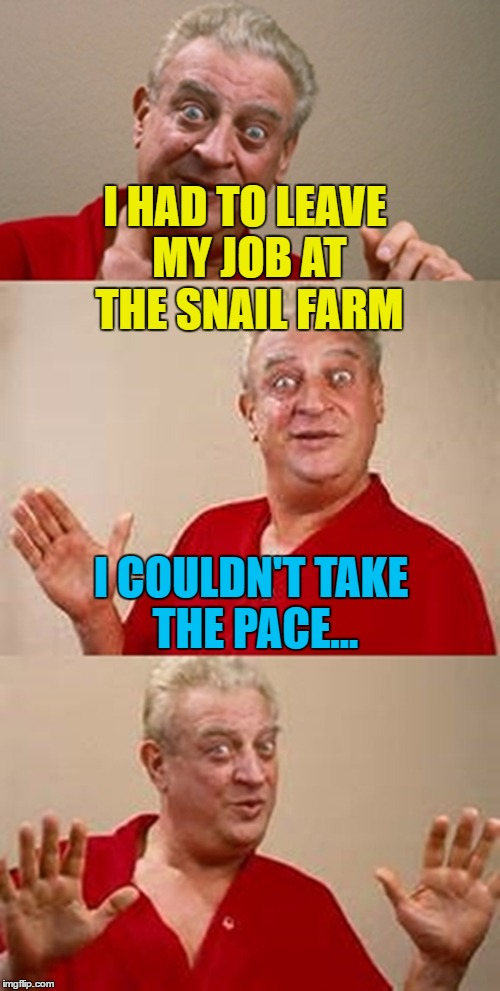 It did bring him out of his shell... :) | I HAD TO LEAVE MY JOB AT THE SNAIL FARM I COULDN'T TAKE THE PACE... | image tagged in bad pun dangerfield,memes,snails,animals,farming,jobs | made w/ Imgflip meme maker