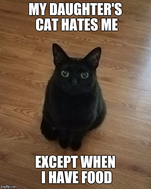 MY DAUGHTER'S CAT HATES ME; EXCEPT WHEN I HAVE FOOD | image tagged in cats,cat,begging cat,share | made w/ Imgflip meme maker