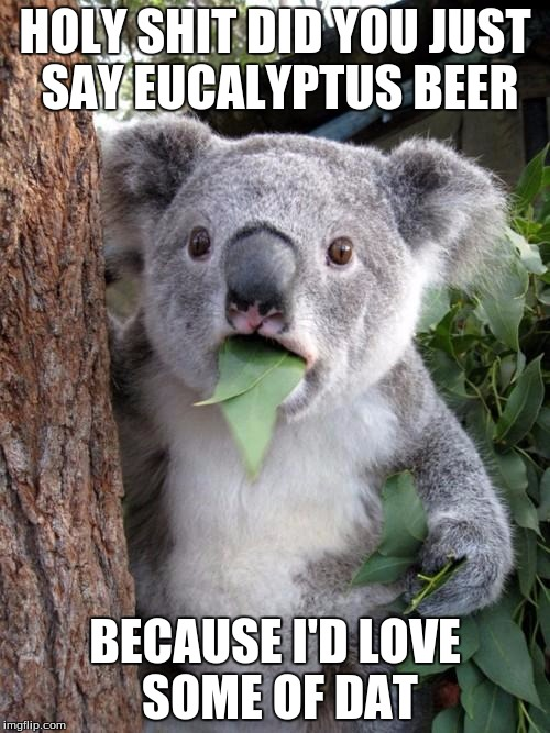Surprised Koala Meme | HOLY SHIT DID YOU JUST SAY EUCALYPTUS BEER BECAUSE I'D LOVE SOME OF DAT | image tagged in memes,surprised koala | made w/ Imgflip meme maker
