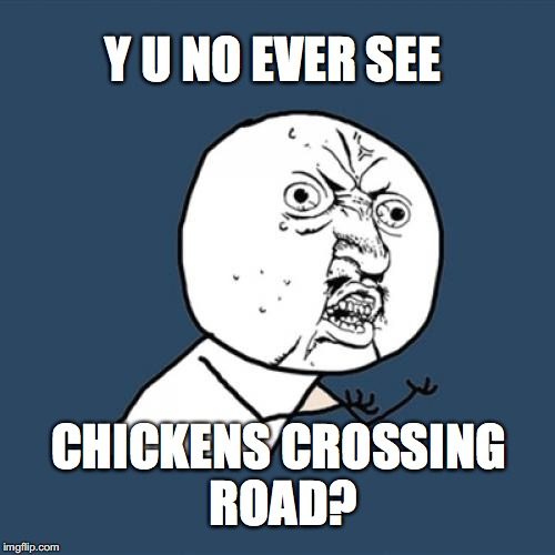 well i never seen one. | Y U NO EVER SEE CHICKENS CROSSING ROAD? | image tagged in memes,y u no,chicken,road | made w/ Imgflip meme maker