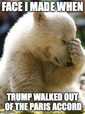 poor polar bears |  FACE I MADE WHEN; TRUMP WALKED OUT OF THE PARIS ACCORD | image tagged in memes,facepalm bear,politics,trump,environment | made w/ Imgflip meme maker