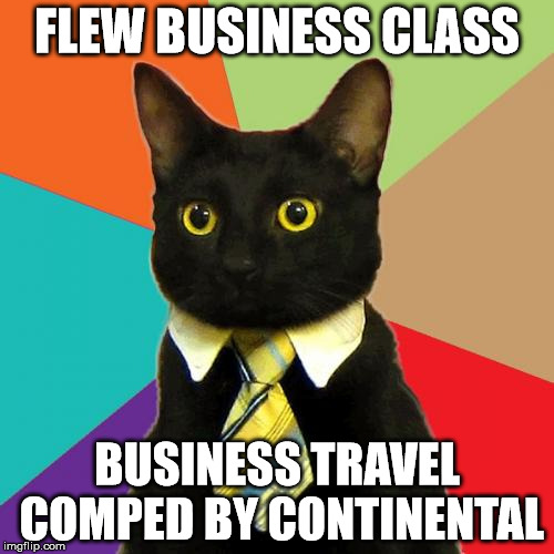 1qyj17 business cat meme imgflip