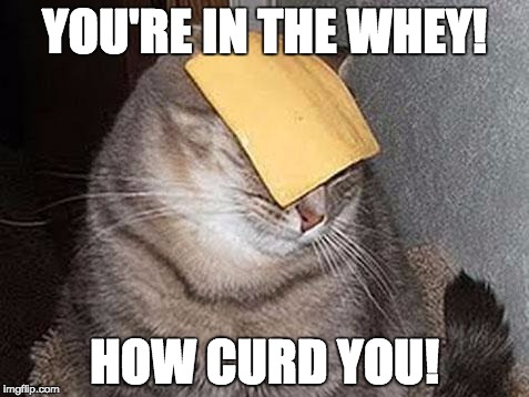 Cheesy, I Know | YOU'RE IN THE WHEY! HOW CURD YOU! | image tagged in cats with cheese,whey,curd,punpunpun,pun | made w/ Imgflip meme maker
