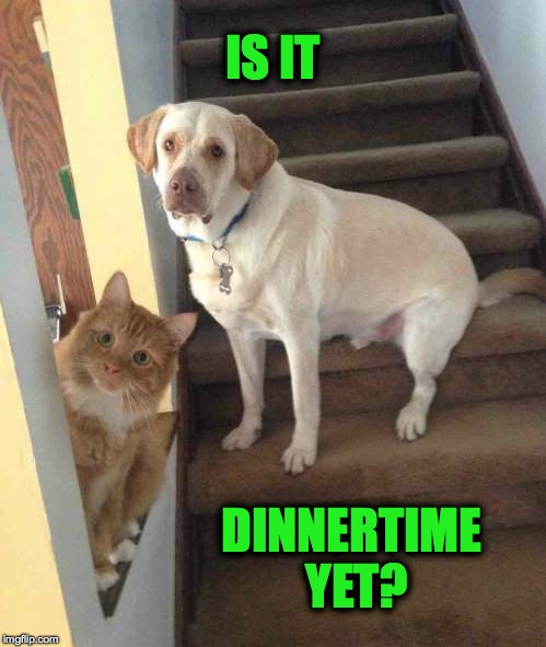 Hungry Doggo and Kitteh | IS IT DINNERTIME YET? | image tagged in dinnertime | made w/ Imgflip meme maker