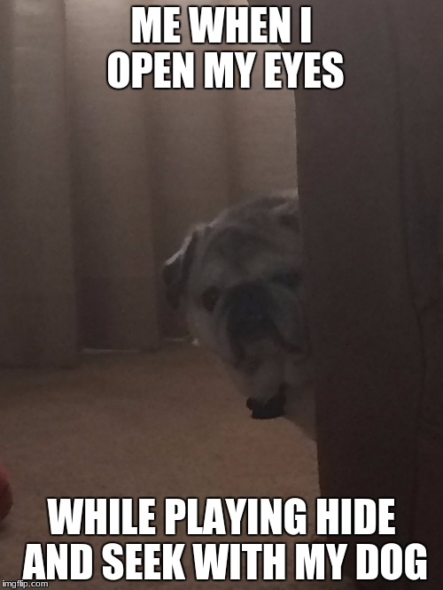 HIde and seek dog | ME WHEN I OPEN MY EYES WHILE PLAYING HIDE AND SEEK WITH MY DOG | image tagged in learn to hide,stupid dog | made w/ Imgflip meme maker