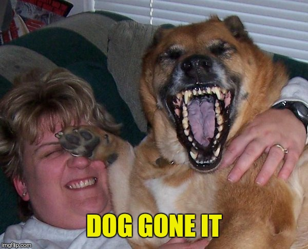 laughing dog | DOG GONE IT | image tagged in laughing dog | made w/ Imgflip meme maker