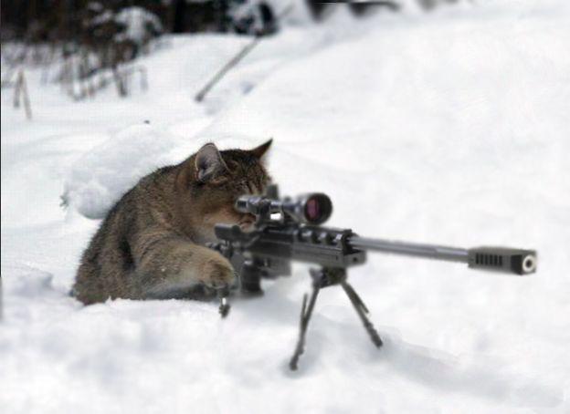sniper cat Blank Template - Imgflip