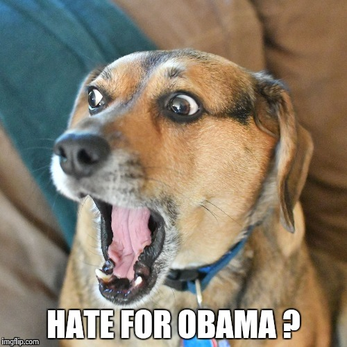 Shocked Dog | HATE FOR OBAMA ? | image tagged in shocked dog | made w/ Imgflip meme maker