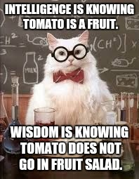 Any other D&D nerds out there ? | INTELLIGENCE IS KNOWING TOMATO IS A FRUIT. WISDOM IS KNOWING TOMATO DOES NOT GO IN FRUIT SALAD. | image tagged in smart cat | made w/ Imgflip meme maker