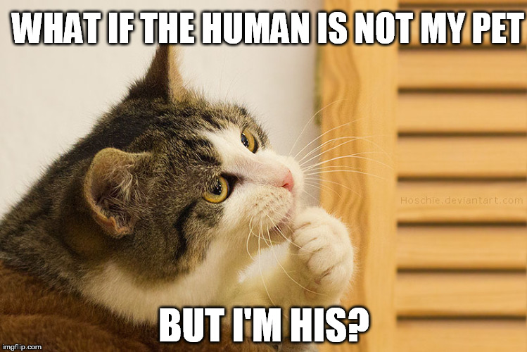 Philosocattor | WHAT IF THE HUMAN IS NOT MY PET BUT I'M HIS? | image tagged in cat,philosophy | made w/ Imgflip meme maker