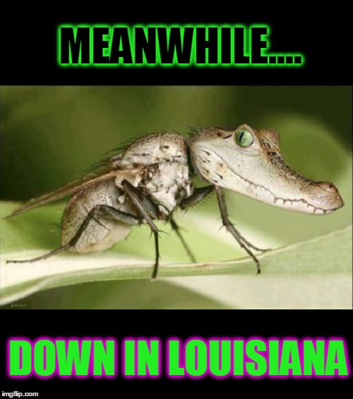 Louisiana Mosquidile | MEANWHILE.... DOWN IN LOUISIANA | image tagged in vince vance,alligators,crocodile,swamp creatures,mosquitoes,mosquito | made w/ Imgflip meme maker