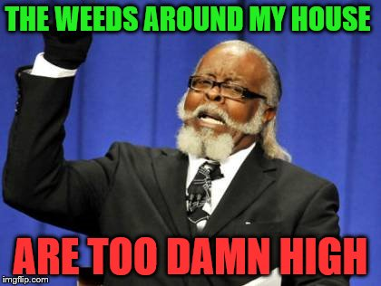 Its Fathers Day Weekend, I'm not doing a damn thing about it | THE WEEDS AROUND MY HOUSE ARE TOO DAMN HIGH | image tagged in memes,too damn high | made w/ Imgflip meme maker