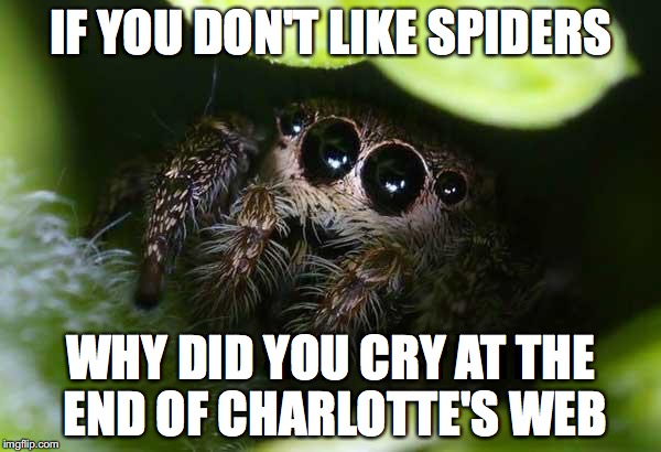 missunder stoood spider | IF YOU DON'T LIKE SPIDERS WHY DID YOU CRY AT THE END OF CHARLOTTE'S WEB | image tagged in missunder stoood spider | made w/ Imgflip meme maker