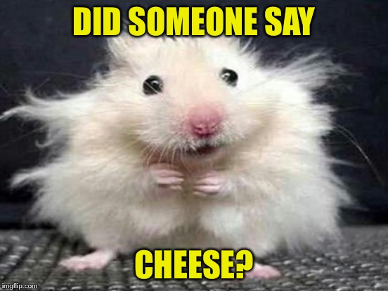 DID SOMEONE SAY CHEESE? | made w/ Imgflip meme maker