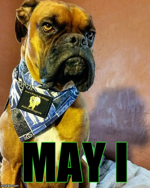 Grumpy Dog | MAY I | image tagged in grumpy dog | made w/ Imgflip meme maker