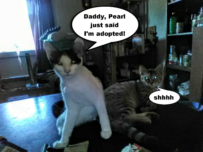 I was dreading the day this would happen | DADDY, PEARL JUST SAID I'M ADOPTED! SHHHH | image tagged in memes,cats,pet adoption,noisy nag,miss pearl | made w/ Imgflip meme maker