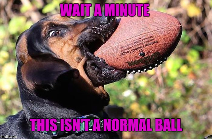 That's no tennis ball buddy | WAIT A MINUTE THIS ISN'T A NORMAL BALL | image tagged in funny memes,memes,dogs,football | made w/ Imgflip meme maker