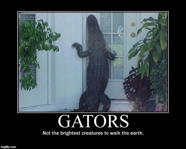 Might as well do something about something :/ | GATORS NOT THE BRIGHTEST CREATURES TO WALK THE EARTH | image tagged in demotivationals,gators | made w/ Imgflip meme maker