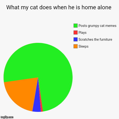 What my cat does when he is home alone | Sleeps, Scratches the furniture, Plays, Posts grumpy cat memes | image tagged in funny,pie charts | made w/ Imgflip pie chart maker