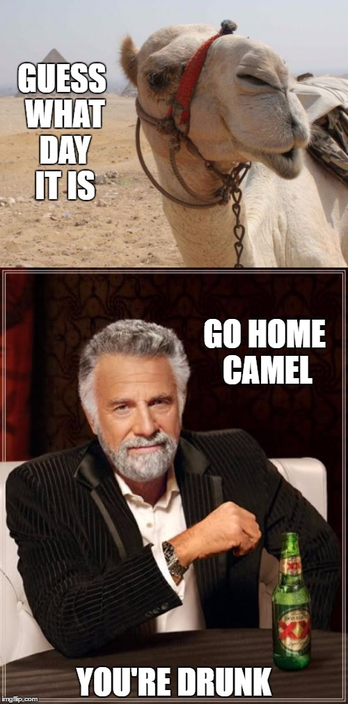 Happy fathers day | GUESS WHAT DAY IT IS YOU'RE DRUNK GO HOME CAMEL | image tagged in fathers day | made w/ Imgflip meme maker