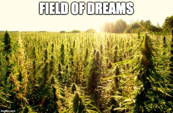 FIELD OF DREAMS | image tagged in field,dreams,weed | made w/ Imgflip meme maker
