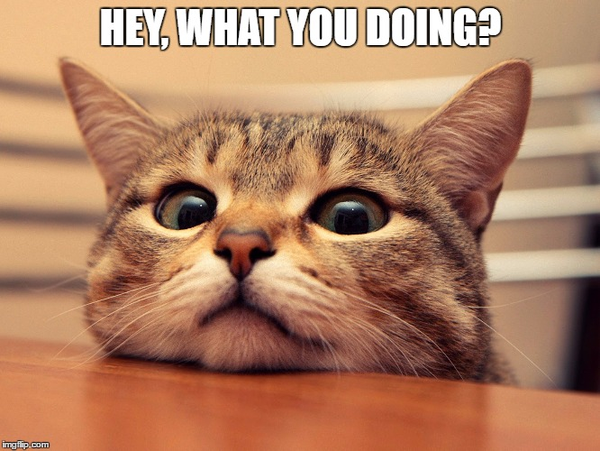 HEY, WHAT YOU DOING? | image tagged in hello | made w/ Imgflip meme maker