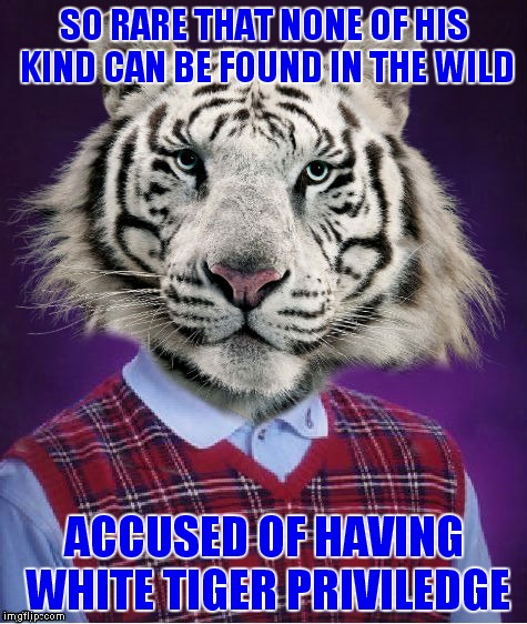 And he is Siberian not from the Bengal region! | SO RARE THAT NONE OF HIS KIND CAN BE FOUND IN THE WILD ACCUSED OF HAVING WHITE TIGER PRIVILEDGE | image tagged in bad luck,tiger | made w/ Imgflip meme maker