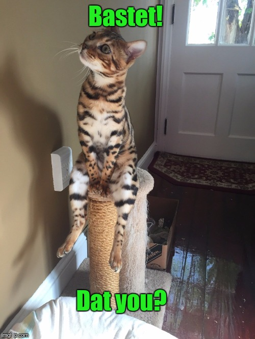 Cat Chilling | Bastet! Dat you? | image tagged in cat chilling | made w/ Imgflip meme maker