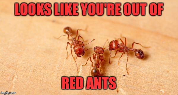 LOOKS LIKE YOU'RE OUT OF RED ANTS | made w/ Imgflip meme maker