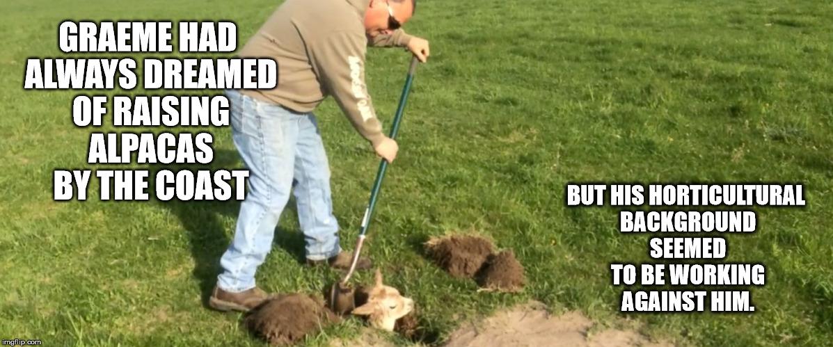 1r4bav alpaca imgflip,Alpaca Meme Generator