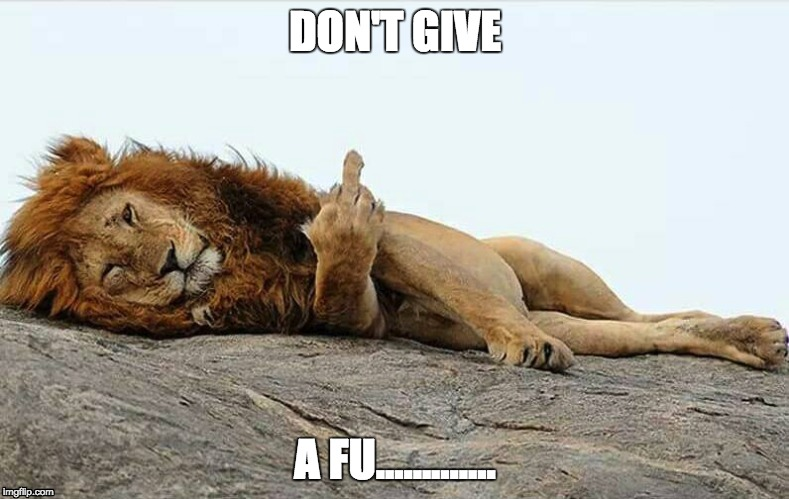 DON'T GIVE A FU............. | image tagged in i don't give a fuck,funny,lion | made w/ Imgflip meme maker