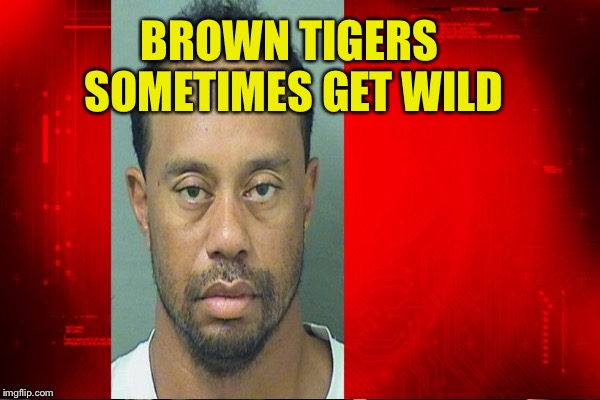 BROWN TIGERS SOMETIMES GET WILD | made w/ Imgflip meme maker