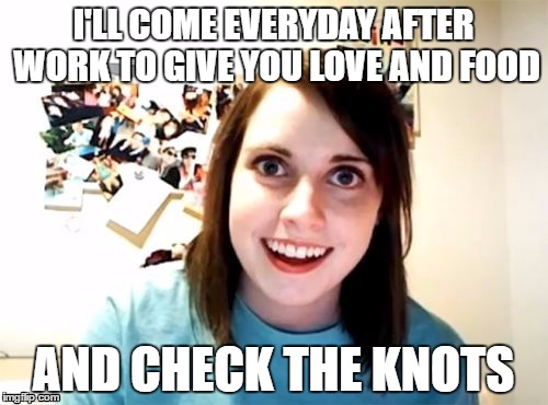I'LL COME EVERYDAY AFTER WORK TO GIVE YOU LOVE AND FOOD AND CHECK THE KNOTS | made w/ Imgflip meme maker