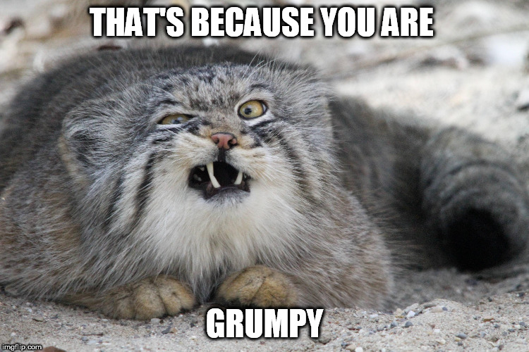 THAT'S BECAUSE YOU ARE GRUMPY | made w/ Imgflip meme maker