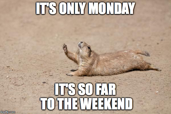 i don't think i'm gonna make it | IT'S ONLY MONDAY IT'S SO FAR TO THE WEEKEND | image tagged in desperately seeking help,monday,squirrel | made w/ Imgflip meme maker