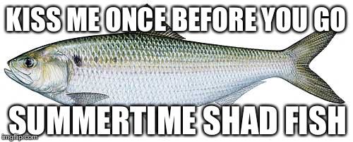KISS ME ONCE BEFORE YOU GO; SUMMERTIME SHAD FISH | image tagged in memes | made w/ Imgflip meme maker