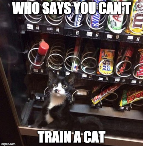 Challenge accepted! | WHO SAYS YOU CAN'T TRAIN A CAT | image tagged in challenge accepted,cat,train,iwanttobebacon,iwanttobebaconcom | made w/ Imgflip meme maker