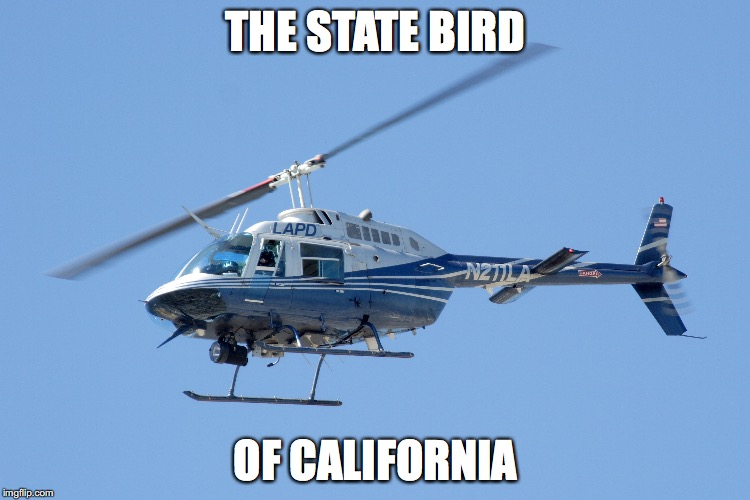 THE STATE BIRD OF CALIFORNIA | image tagged in bird,helicopter,california,chopper,los angeles,lapd | made w/ Imgflip meme maker