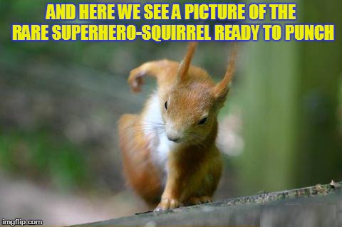 It's Squirrel week! From now to the 25th! A robroman event. | AND HERE WE SEE A PICTURE OF THE RARE SUPERHERO-SQUIRREL READY TO PUNCH | image tagged in memes,squirrel week,super hero,squirrel,punch,funny memes | made w/ Imgflip meme maker