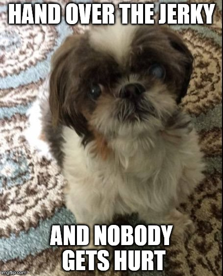 No Shih Tzu | HAND OVER THE JERKY AND NOBODY GETS HURT | image tagged in no shih tzu | made w/ Imgflip meme maker