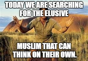 TODAY WE ARE SEARCHING FOR THE ELUSIVE MUSLIM THAT CAN THINK ON THEIR OWN. | image tagged in steve irwin,steve irwin crocodile hunter,memes | made w/ Imgflip meme maker