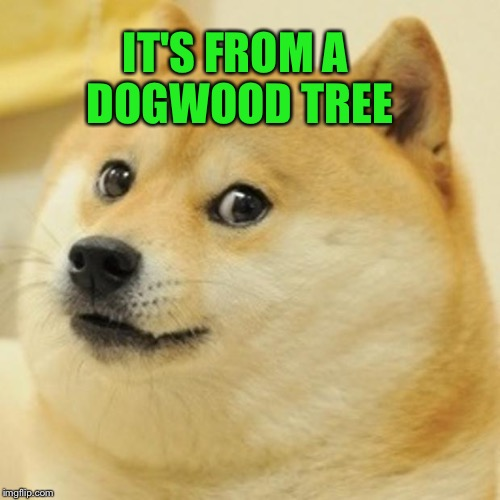 Doge Meme | IT'S FROM A DOGWOOD TREE | image tagged in memes,doge | made w/ Imgflip meme maker