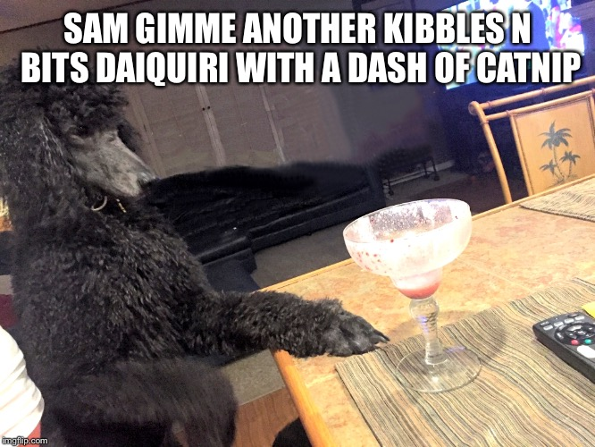 Noah Gump at Bar | SAM GIMME ANOTHER KIBBLES N BITS DAIQUIRI WITH A DASH OF CATNIP | image tagged in noah gump at bar | made w/ Imgflip meme maker