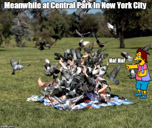 Meanwhile at Central Park In New York City Ha! Ha! | image tagged in funny,pidgeon,nelson muntz,ha ha | made w/ Imgflip meme maker