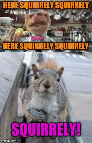 Muppet Show Fans will understand | HERE SQUIRRELY SQUIRRELY HERE SQUIRRELY SQUIRRELY SQUIRRELY! | image tagged in squirrel week,muppet show,swedish chef | made w/ Imgflip meme maker