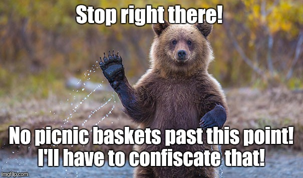 Funny Bear | Stop right there! No picnic baskets past this point! I'll have to confiscate that! | image tagged in funny bear | made w/ Imgflip meme maker