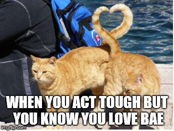 wegottcha16 | WHEN YOU ACT TOUGH BUT YOU KNOW YOU LOVE BAE | image tagged in cats,love,kittens,tough,bae | made w/ Imgflip meme maker