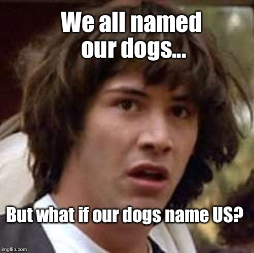 And What Would The Names BE?? | We all named our dogs... But what if our dogs name US? | image tagged in memes,conspiracy keanu,dogs | made w/ Imgflip meme maker