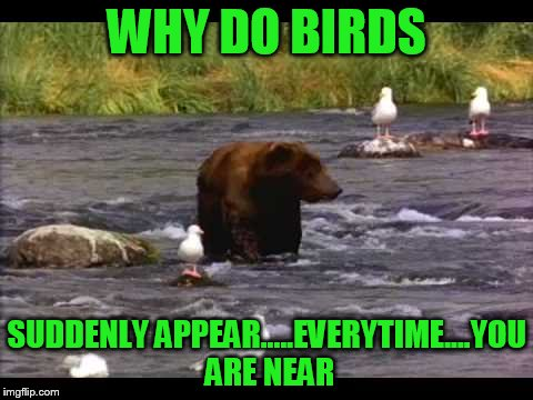 WHY DO BIRDS SUDDENLY APPEAR.....EVERYTIME....YOU ARE NEAR | made w/ Imgflip meme maker
