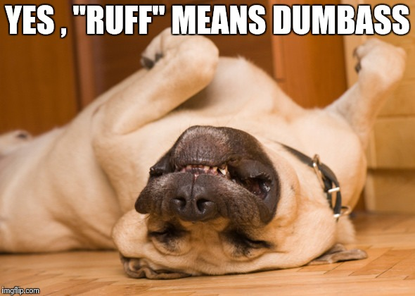 "Sleeping dog | YES , ""RUFF"" MEANS DUMBASS 